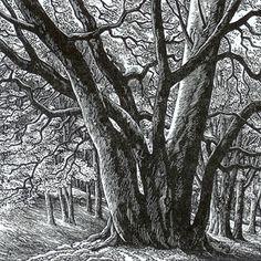 Wood engraving artist Sue Scullard portfolio of prints she is based in Kent, UK Woodcut Art, Linocut Prints, Art Prints, Engraving Art, Engraving Illustration, Scratchboard, Art Journal Techniques, Lino Cuts, Encaustic Painting