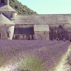 La Vie en LavandeAbbaye de Senanque, Provence - Long before its scent infused our Trader Joe's dryer sheets, billions of these tiny purple-blue flowers grow in great swaths in the corner of the Cote d'Azur and Provence in June, July, and August.