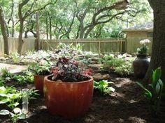shade garden two
