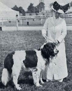 Landseer Dog, Historical Images, Vintage Dog, Gentle Giant, Big Dogs, Dog Photos, Vintage Photographs, Doge, Dog Breeds