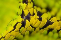 Macro photographs of the wings of butterflies and moths   Vuing.com