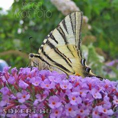 Beautiful Gardens, Gardening, Home Decor, Summer, Design, Mirrors, Decoration Home, Summer Time, Room Decor