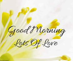 Are you looking for inspiration for good morning motivation?Check out the post right here for very best good morning motivation inspiration. These unique images will brighten your day. Good Morning Beautiful Gif, Good Morning Happy Sunday, Good Morning Handsome, Good Morning Quotes For Him, Good Morning Funny, Good Morning Messages, Good Morning Wishes, Morning Thoughts, Latest Good Morning Images
