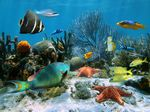 Stock Photography of Coral reef and starfish - Coral garden with starfish and... csp10123011 - Search Stock Photos, Pictures, Images, and Photo Clip Art