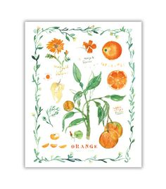 Orange tree and oranges print with leaf border.  Archival giclee print of my original watercolor painting. Signed with pencil. Printed on fine art  BFK Rives  hot-pressed paper, smooth surface, 140 lb, 100% cotton (acid free ), using archival pigment inks. The french Rives paper is gorgeous, it captures the essence of the original watercolor painting.  Format : Vertical.  Size :  * 8X10: The paper measures 8X10 inches (20,3 cm X 25,4 cm)  * 8 1/4 X 11 3/4 (A4) : The paper measures 8...