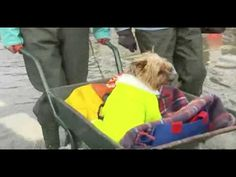 Dog Rescued From Flood In Staines, UK