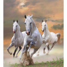 Custom Animal Decor Tapestry, Stallion Horses Running on a Mystical Sky Background Equestrian Male Champions Print,Bedroom Living Room Dorm Accessories Wall Hanging Inches Pretty Horses, Beautiful Horses, Animals Beautiful, Horse Wallpaper, Animal Wallpaper, Horse Pictures, Art Pictures, Painting Pictures, Majestic Horse