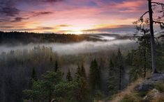 Tourism guide to Finland. A travel guide to the best attractions in Finland in summer and winter. Things to see and do when traveling in Finland. 2k Wallpaper, Sunrise Wallpaper, Nature Wallpaper, Forest Wallpaper, Scenic Wallpaper, Forest Sunset, Foggy Forest, Sunset Sky, Forest Hill