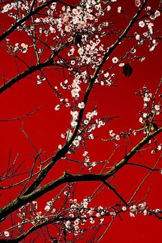 17 Ideas wall paper red black white for 2019 Art Japonais, Red Wallpaper, Photo Wall Collage, White Aesthetic, Red Background, Shades Of Red, Belle Photo, Japanese Art, Aesthetic Wallpapers