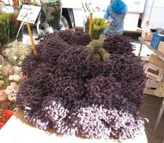 Dried lavender in France!