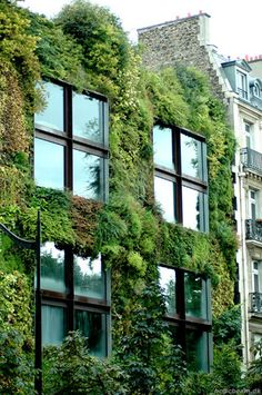 Patrick Blanc created this vertical garden at the Museum Edouard Branly in Paris France