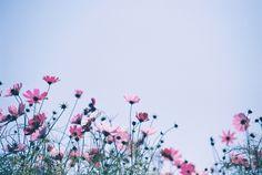 """opcion:  """"floralls  """""""