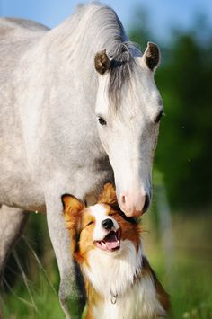 Horse and happy dog