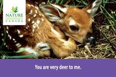 """You are very deer to me"""