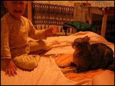 Cat Owns Bratty Tot - hahaha that'll teach him!
