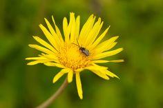 http://www.westcoastseeds.com/productdetail/Flower-Seeds/Wildflowers/Bee-Garden-Blend/  Feed the bees! Plant wildflowers!