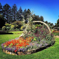 #Repost @rhondamac5  #flowers  #fletcherjonesgarden  #destinationwarrnambool #love3280 #basket of flowers by destinationwarrnambool http://ift.tt/1LWgNOG