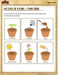 Life Cycle of a Plant – Flash Cards - Printable Science Worksheet for Grade Science Worksheets, Science Activities, Plant Life Cycle Worksheet, Cycle For Kids, Plant Lessons, Science For Kids, Life Cycles, Life Cycle Of Plants, Women's Cycling