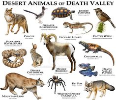 Fine art illustration of some of the unique animals native to the Orinoco River Valley in the Amazon
