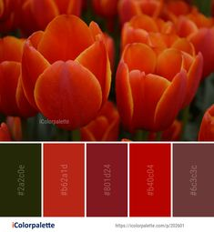 Color Palette Ideas from Flower Tulip Flowering Plant Image Colour Combinations, Color Schemes, Orange Color Palettes, Plant Images, Native American Beading, Color Box, Colour Inspiration, World Of Color, Color Pallets