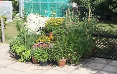 Container vegetable gardening enables you to grow fresh, safe vegetables without a garden - want to see how? Photos, tips and instructions on how and what to grow for container vegetable gardening