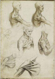 Los huesos y los musculos del hombro