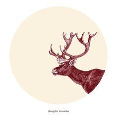 Caribou Print / Digital Print / Wall Poster Home Decor /  Reindeer Rangifer tarandus / 8 x 10