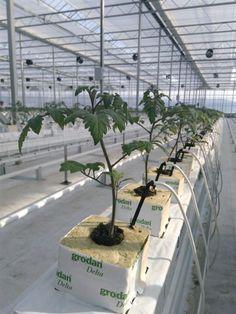 Greenhouse Farming, Hydroponic Farming, Indoor Greenhouse, Hydroponic Growing, Hydroponics System, Vertical Garden Diy, Vertical Farming, Farm Cafe, Modern Agriculture