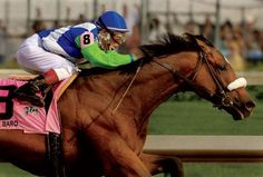 "Going into the Kentucky Derby, Barbaro was undefeated. He charged ahead during the last turn and straightaway to win by six and a half lengths. Barbaro's lead in the final furlong expanded, although jockey Edgar Prado did not use the whip and ask for his top speed. This margin of victory at the Kentucky Derby was the largest since 1946, when Triple Crown winner Assault took the ""Run for the Roses"" by eight lengths. Barbaro's win made him only the sixth undefeated horse to win the Kentucky…"
