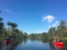 On New Orleans Kayak Swamp Eco-Tours you will explore the beauty of the swamps tours and plantations tours with small groups led by local eco-guides. New Orleans Plantation Tours, Perfect Image, Perfect Photo, Love Photos, Cool Pictures, New Orleans Swamp Tour, Get Instagram