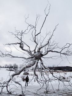 Untitled by Roxy Paine on Curiator – http://crtr.co/23yl