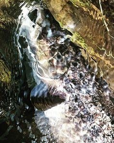 #flyfishigfanatics #flyfishingphotography #flyfishing #fluefiske #flugfiske #laks #laksefiske #loonoutdoors #salmon #atlanticsalmon #thetugisthedrug #fish #fishing #simmsfishing #visionflyfishing #visitnorway #looptackle #catchandrelese #utpåtur #fisketur #hookedno #brufoss #brufossfiske #lågen #lågenlaks #photooftheday #gopro #rioproducts #ltsflyfishing