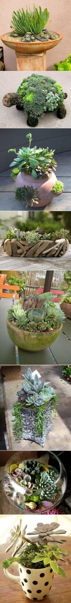 DIY Succulent Garden Ideas by Hercio Dias