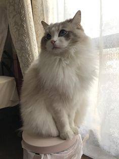 うちの猫が2歳になったので見て欲しい