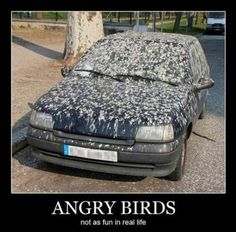 That is a lot of angry birds!  :-p