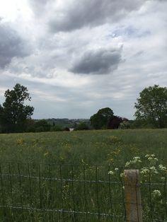 Countryside, Vineyard, Outdoor, Art, Outdoors, Art Background, Vine Yard, Kunst, Vineyard Vines