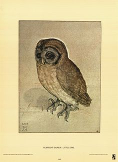 Durer's Little Owl drawing. I love owls and I love how simplistic this is. Would love to hang this in my workspace.