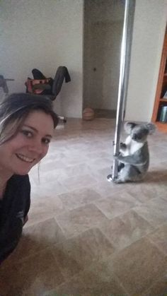 This Woman Came Home To Find a Koala Doing a Pole Dance | 22 Words