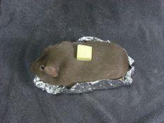 Day 24: Human still thinks I'm a baked potato.