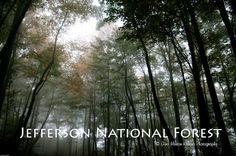 Jefferson National Forest in Southwest Virginia.  The perfect place to get lost for a few hours.