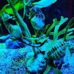 #seahorse #sealife #aquarium #orlando #amazing #cavalomarinho #aquario #tipsforfunofficial