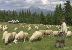 Na Kriváni sa kedysi ťažilo, najvyššie bola baňa 50 m pod vrcholom - Regióny - TERAZ.sk