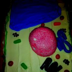 Plant cell cookie cake science project.