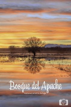 New Mexico's Bosque del Apache National Wildlife Refuge is a hidden gem in the National Park portfolio.