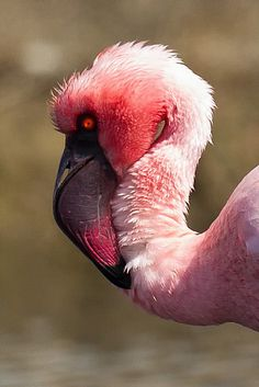 Bird photographs from Southern Africa