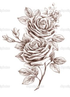 rose drawing - Google Search