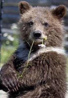 Sweet baby bear! ❤️