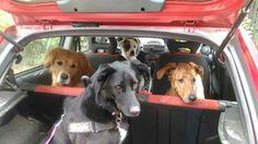 - Torino con Tabor, Leo e Peja Leo, Dogs, Animals, Animales, Animaux, Pet Dogs, Doggies, Animal, Animais