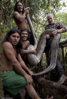 Largest ever Anaconda gets captured in Ecuador (Photos) Anaconda Gigante, World's Largest Snake, Ecuador, Giant Anaconda, Anaconda Snake, Bbc Presenters, Snake Photos, Long Snake, Amazon River