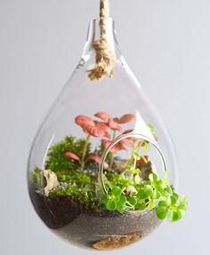 www.florofil.pl <3 hanging mini garden with fittonia!